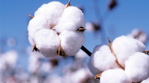 http://about.hm.com/AboutSection/en/About/Sustainability/Commitments/Use-Resources-Responsibly/Raw-Materials/Cotton.html