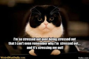 stressed out over being stressed out